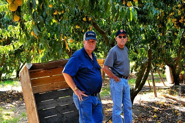 Simple Peach Sorbet Recipe and Del Monte Harvest | ©addapinch.com