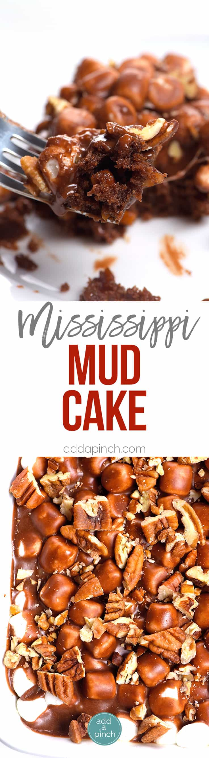 Mississippi Mud Cake Recipe - Mississippi mud cake is a simple, yet scrumptious chocolate dessert with marshmallows, pecans and a rich chocolate icing. // addapinch.com