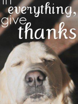 Mingle Monday {Gratitude}