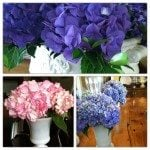 Hydrangea Lovin' {Mingle Monday}