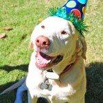 Party Like a Dog