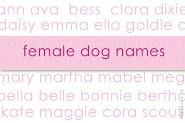 Dog Names | addapinch.com