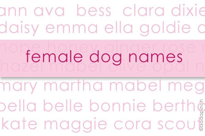 Dog Names My Favorite Female Dog Names Living Add A Pinch