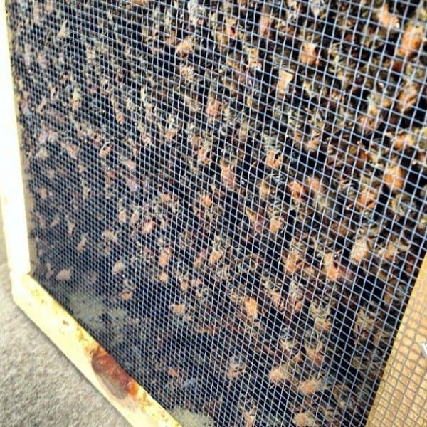 Bees | © addapinch.com