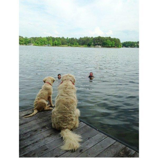 lake-dogs