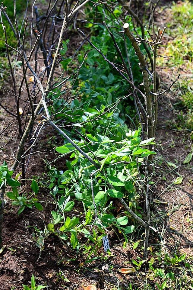Blackberry Farm from addapinch.com