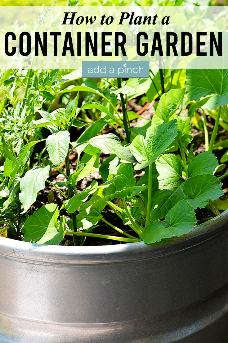 Container Garden with Green Leaves on Vegetables with text - addapinch.com