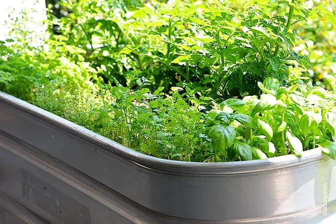 Container Gardening Update from addapinch.com
