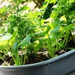 Container Gardening Update!