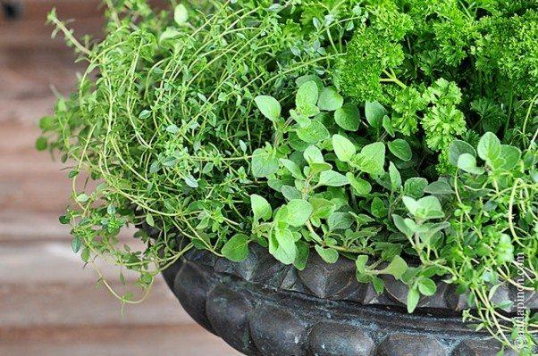 Porch Herb Garden  ©addapinch.com