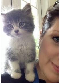 Miss Socks the Cat