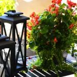 rp_my-flowers-DSC_6109.jpg